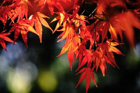 macroeconomic:  Plant, leaf,