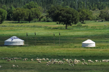 leisurely: A city of northern Baotou China prairie City, Mongolia near the sheep in a leisurely grazing package.
