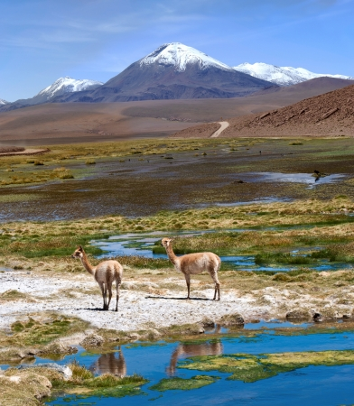 the pampas: Andes near Paso Jama, Chile-Argentina-Bolivia Stock Photo
