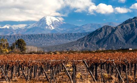 火山のアコンカグアとブドウ園です。アコンカグア 6,962 の m (22,841 ft) でアメリカ大陸で最も高い山です。アルゼンチン メンドーサ州、アンデス山脈
