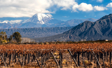 Volcano Aconcagua and Vineyard. Aconcagua is the highest mountain in the Americas at 6,962 m (22,841 ft). It is located in the Andes mountain range, in the Argentine province of Mendoza photo