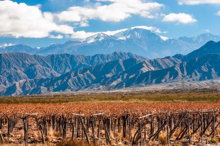 Vineyard: Volcán Aconcagua y Martha. Aconcagua es la montaña más alta de las Américas en 6962 m (22.841 pies). Se encuentra en la cordillera de los Andes, en la provincia argentina de Mendoza
