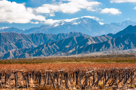 redwine: Volcano Aconcagua and Vineyard. Aconcagua is the highest mountain in the Americas at 6,962 m (22,841 ft). It is located in the Andes mountain range, in the Argentine province of Mendoza