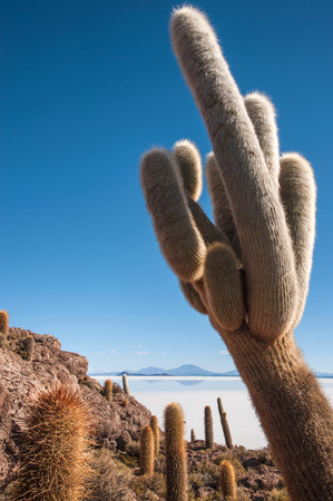 Isla de Pescadores, Salt lake Uyuni in Bolivia photo