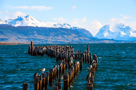 puerto natales: King Cormorant colony, Old Dock, Puerto Natales, Chile