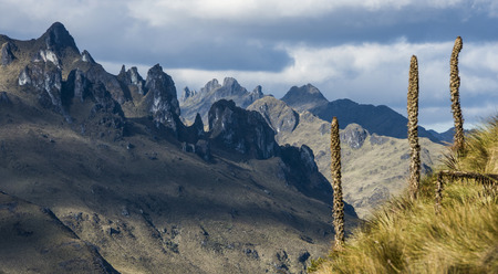 Anden. Cajas Nationalpark, Anden-Hochland, Ecuador Standard-Bild - 28328273