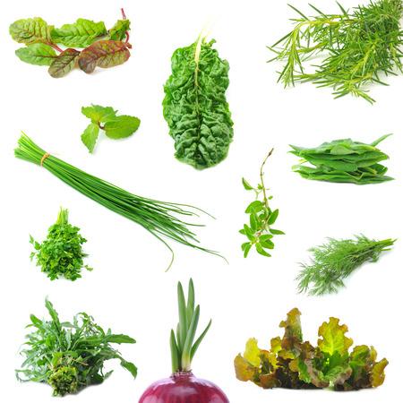 Mix organic salad leaves and salad onion springs Standard-Bild