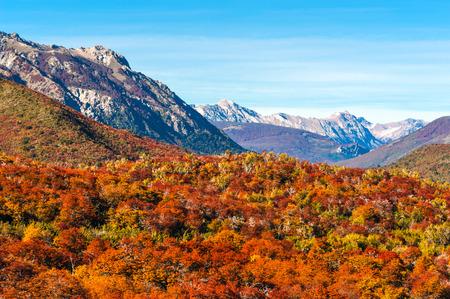 lake nahuel huapi: Autumn Colors of Patagonia, near Bariloche, Argentina