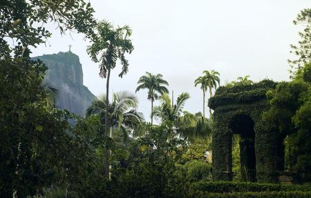 Botanical Garden in Rio de Janeiro, Brazil photo