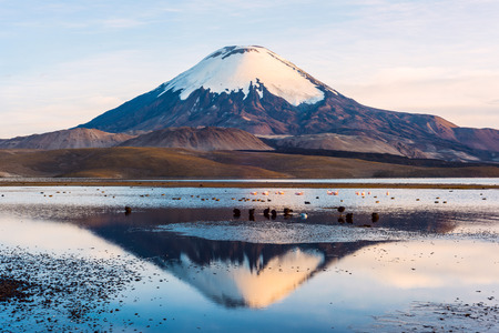 Snow capped Parinacota Volcano reflected in Lake Chungara, Chile photo