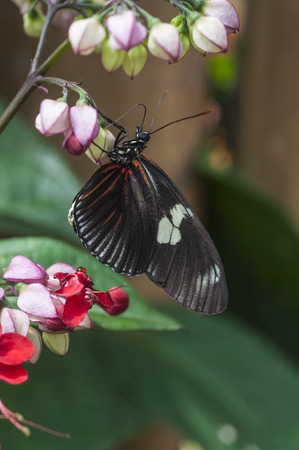 changing form: butterfly fly in morning nature