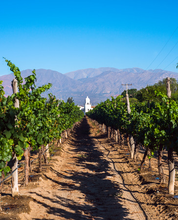Vineyards in Cafayate Argentina