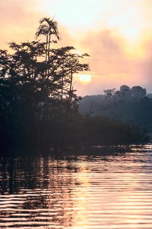amazonian: Early morning in Amazonian rainforest. Lake Cuyabeno Laguna Grande. Ecuador Stock Photo