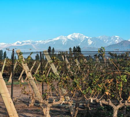 aconcagua: Volcano Aconcagua Cordillera and Vineyard. Andes mountain range, in the Argentine province of Mendoza