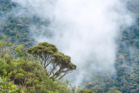 envelop: Clouds envelop the hills near Macas, Andes. Ecuador Stock Photo