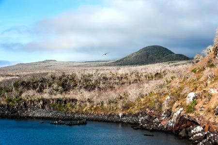 cristobal: Dry forests on the island San Cristobal, Galapagos