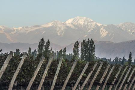Vroeg in de ochtend in de wijngaarden. Vulkaan Aconcagua Cordillera. Andesgebergte, in Maipu, Argentijnse provincie Mendoza