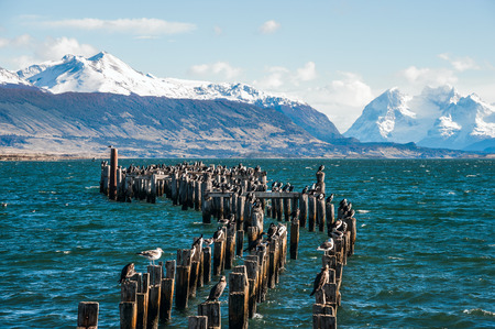 puerto natales: King Cormorant colony, Old Dock, Puerto Natales, Antarctic Patagonia, Chile Stock Photo