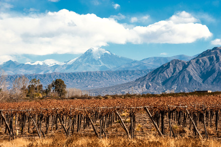 Volcano Aconcagua and Vineyard. Aconcagua is the highest mountain in the Americas at 6,962 m (22,841 ft). It is located in the Andes mountain range, in the Argentine province of Mendoza Banco de Imagens - 40958337