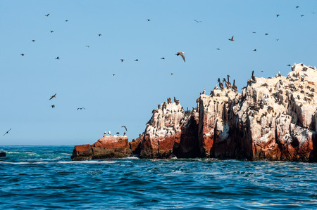 peru: Ballestas Islands, Paracas National Reserve. The very first Marine Conservation center in Peru, refer to the prolific wildlife and the great scenery as the Galapagos of Peru