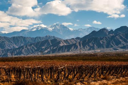 火山のアコンカグアとブドウ園。アコンカグアは、6,962 m (22,841 フィート) でアメリカ大陸で最も高い山です。アルゼンチン メンドーサ州のアンデス