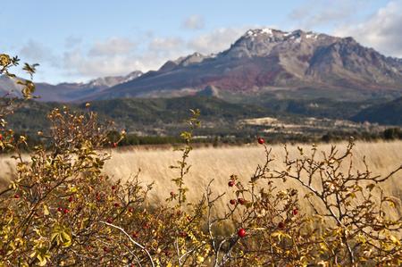 lake nahuel huapi: Autumn Colors in El Boliche, Bariloche, Patagonia, Argentina