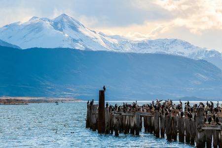 puerto natales: King Cormorant colony, Old Dock, Puerto Natales, Chile