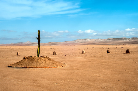 The only plant for many kilometers in the desert region of Tacna, Peru Banco de Imagens - 66004754