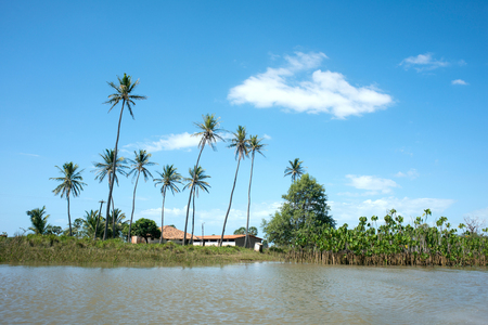 Idyllic landscape with Coconut Trees, Parnaiba River (Portuguese: Rio Parnaiba), the border between the states of Maranhao and Piaui, the longest river entirely located within Brazils Northeast Region