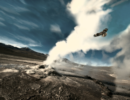 The eagle flies through the ejection of steam from the geyser. Valley of Geysers in the Atacama Desert, Chile Stock Photo
