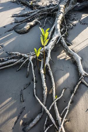 Mangroves on the river Rio Preguica, Maranhao, northern Brazil Standard-Bild
