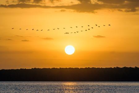 Scarlet ibis on the delta of Parnaiba river, northern Brazil Standard-Bild