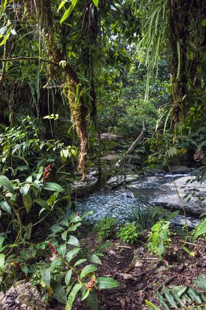Amazon tropical rainforest in
