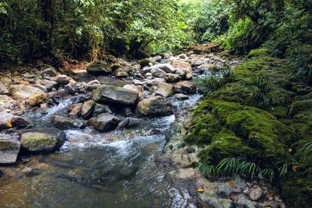 Amazonas-Regenwald Tropischer und Standard-Bild - 94761883