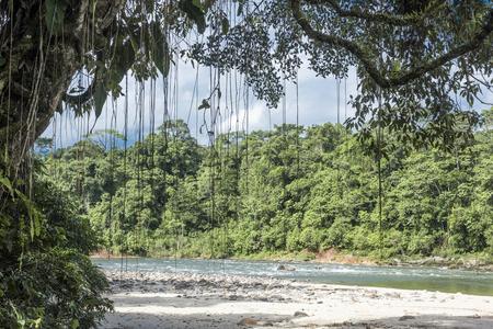 Amazon, View of the tropical rainforest, Rio Napo, Misahualli, Ecuador Standard-Bild