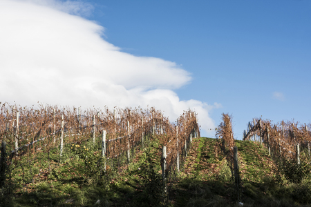 Sunny Autumn Patagonian Vineyard. Esquel in late autumn, when grapes harvested, Argentina Standard-Bild - 101925622