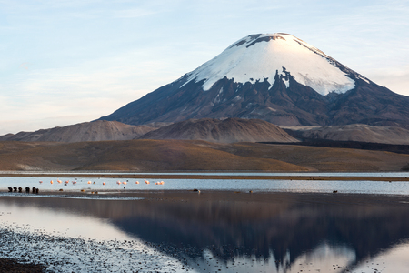 Flamingos on the background of snow capped Parinacota Volcano reflected in Lake Chungara, Chile Standard-Bild