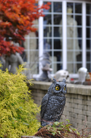 Boston, Massachusetts, USA – October 21, 2009: Owls and pumpkins decorated ordinary houses for Halloween in New England