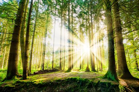 Bos met zonnestralen