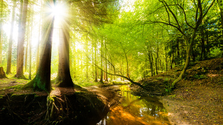 Forest with sunbeams and creek