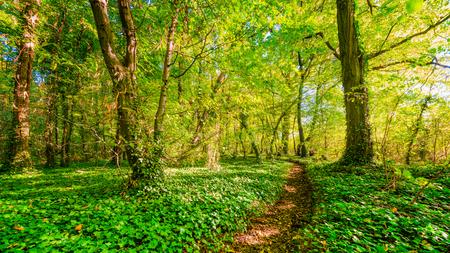 Forest path Standard-Bild