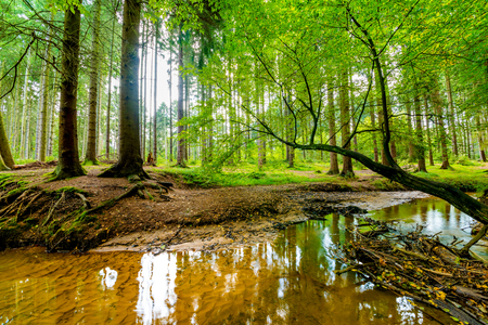 Forest with creek