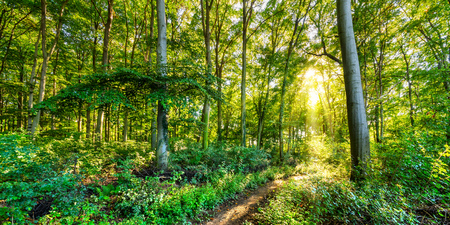 sunlit: Forest with Sunshine