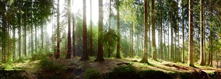 Sunrise in a forest Standard-Bild
