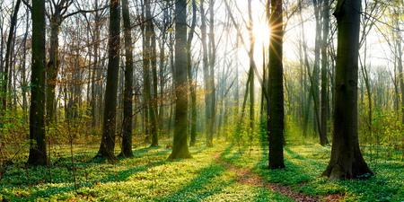 Sunrise in the forest at springtime Standard-Bild