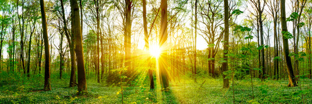 Forest in spring with sunbeams