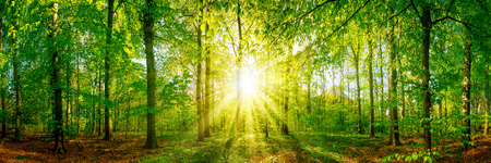 Forest panorama with sun rays Banque d'images