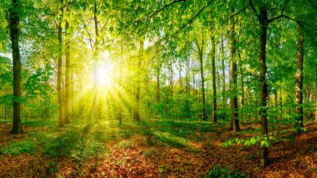 Glimlach in het bos bij zonsondergang Stockfoto