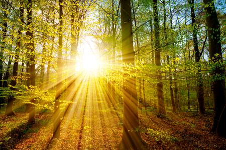 Zonsondergang in het bos met mooie zonnestralen Stockfoto