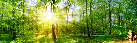 Sunbeams in the forest 스톡 콘텐츠